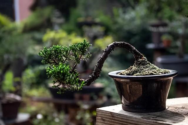 Misty Moon Bonsai Specialist Nursery